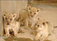 سوء تغذیه حیوانات در باغ وحش خرم آباد